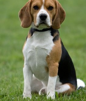 Kid Friendly Facts About Puppies