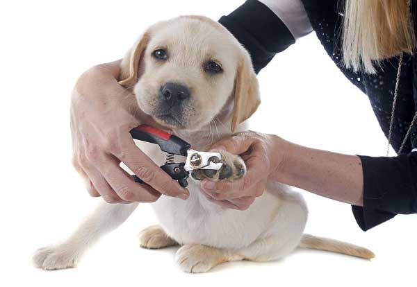 Best Dog Nail Clippers - picture