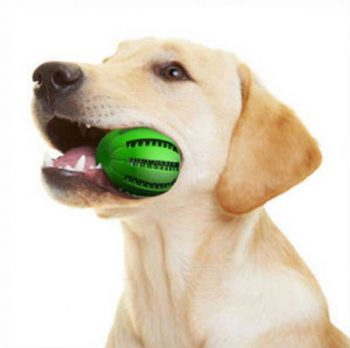 Best dog toys for Labs - picture