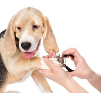 Best Nail Clippers for Dogs - picture