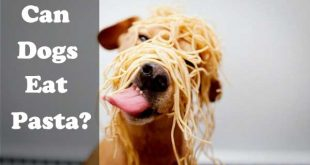 Can dogs eat pasta? - picture