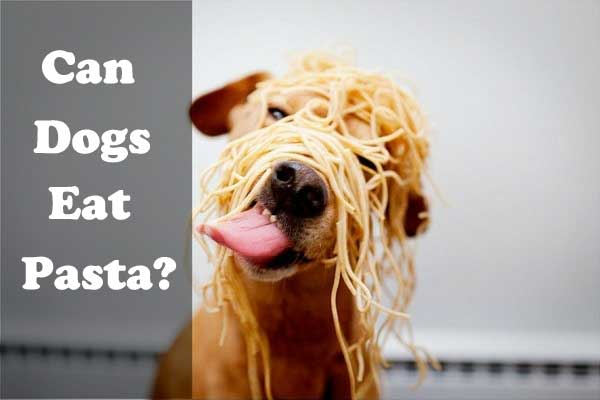 What Type Of Food Do Dogs Eat