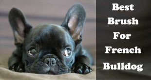 Best brush for French Bulldog - picture