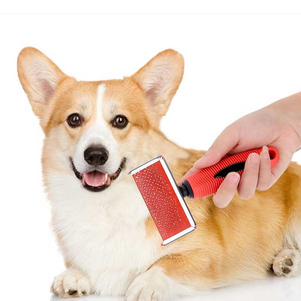 Best brush for short haired dogs - picture