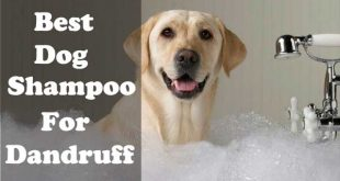 Best dog shampoo for dandruff 0 picture