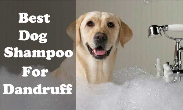 Best dog shampoo for dandruff - picture