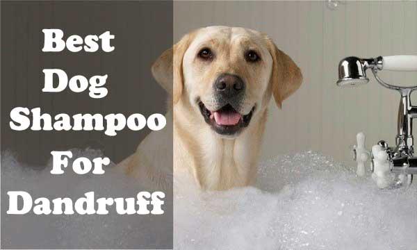 Best dog shampoo for dandruff - picture
