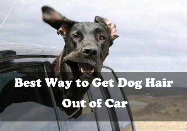 Best way to get dog hair out of car - picture