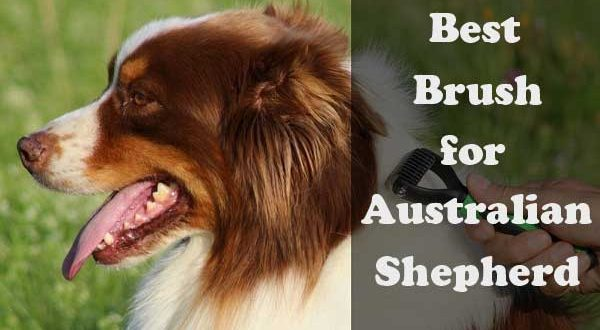 Best brush for Australian Shepherd - picture