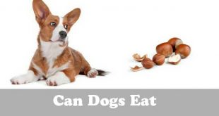 Can dogs eat hazelnuts - picture