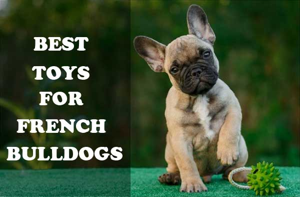 Best toys for French Bulldogs - picture