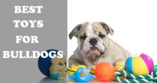 Best toys for bulldogs - picture