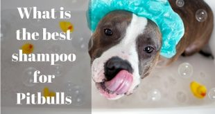Best shampoo for Pitbulls - picture