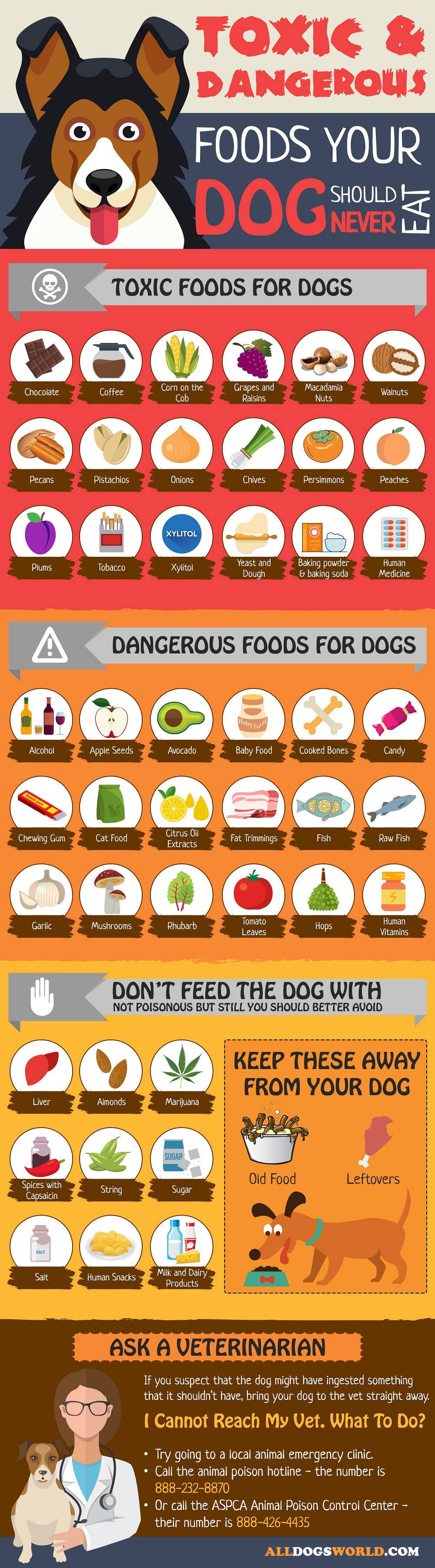 Toxic Foods for Dogs - Infographic